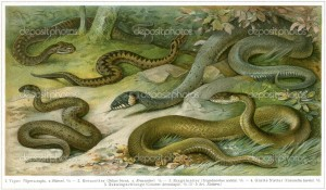 depositphotos_12086833-GERMANY---CIRCA-1910-Various-snakes.-Publication-of-the-book-Meyers-Konversations-Lexikon-Volume-7-Leipzig-Germany-circa-1910
