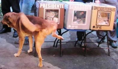 perro mianod urnas